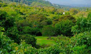 Vistas desde el sendero Centenary Tree Canopy Walking