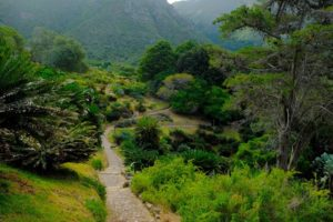 Senderos del Jardín Botánico de Kirstenbosch en Ciudad del Cabo