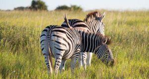 Mlilwane Wildlife Sanctuary, qué ver