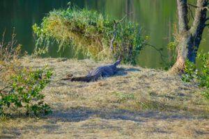 Mlilwane Wildlife Sanctuary, Esuatini