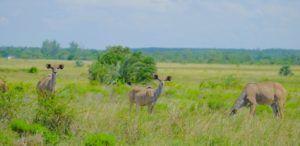 Sección Oeste de Isimangaliso Wetland Park