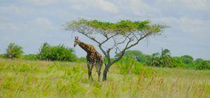 Sección Este de Isimangaliso Wetland Park, Sudáfrica