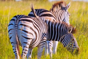 Isimangaliso Wetland Park, Sudáfrica