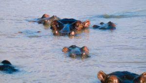 Estuario de Santa Lucia en Sudáfrica, navegando con  hipopótamos