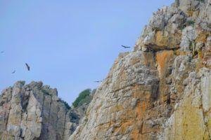Buitres en el Mirador del Salto del Gitano, Monfragüe