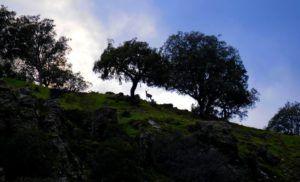 Ciervo desde el Mirador de la Malavuelta