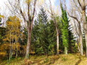 Bosque Finlandés. qué ver en Rascafría