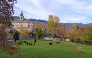 Monasterio de Santa María del Paular, Valle del Paular, Rascafría